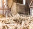 Straw shed 702x336