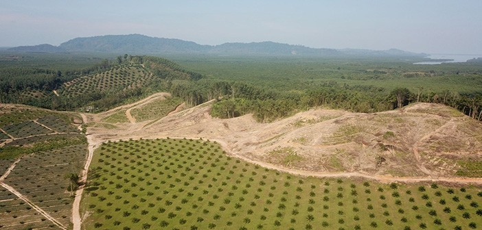 Alternatives to the feeding of palm fat derivatives