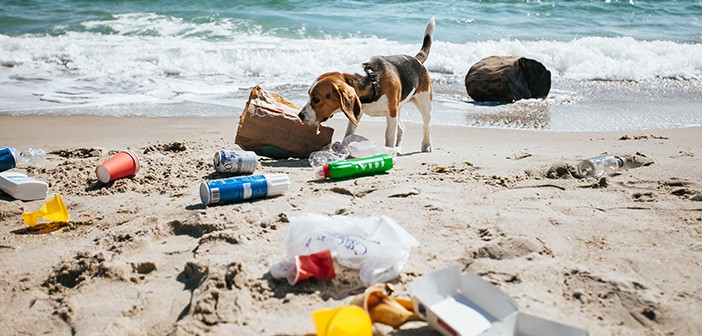 Plastic waste on the beach.A dog is looking for food in a garbag