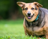 PDSA partners with Royal Canin to tackle growing pet obesity epidemic