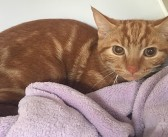 RSPCA braced for influx of cats during kitten season
