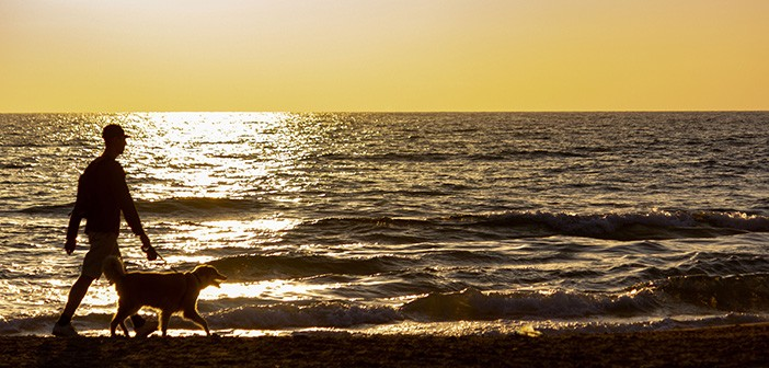 A man and a dog walking along the beach at sunset being silhouet