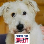 RSPCA – Cancel Out Cruelty