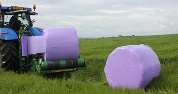 Purple wrap on farm